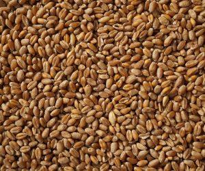 wheat-2205569_1920
